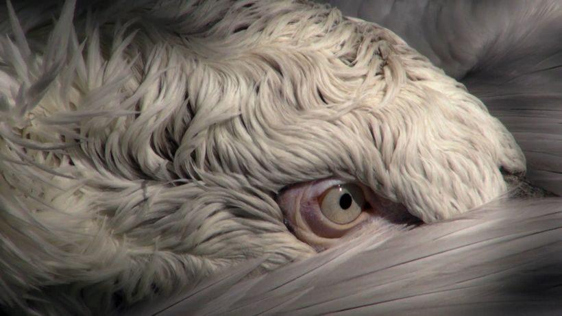BIRDS © Ulu Braun